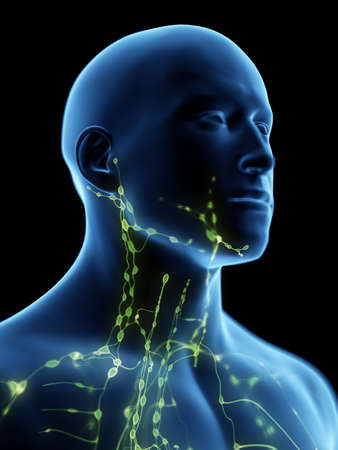 3d rendered medically accurate illustration of the lymphatic system of the neck 스톡 콘텐츠