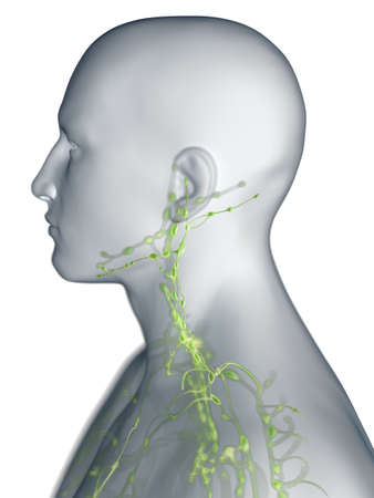3d rendered medically accurate illustration of the lymphatic system of the neck Stock Photo