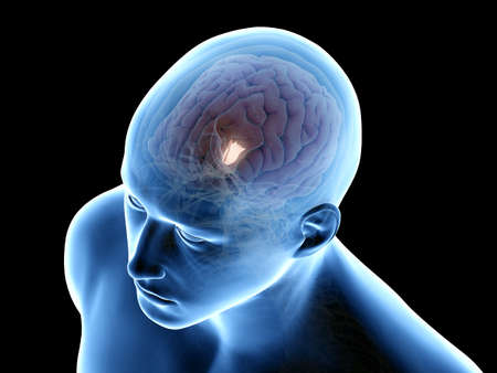 3d rendered medically accurate illustration of the hypothalamus Stockfoto