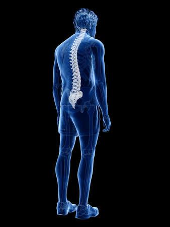 3d rendered medically accurate illustration of the human spine