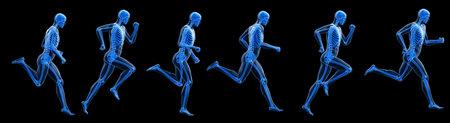3d rendered illustration of a running mans skeleton