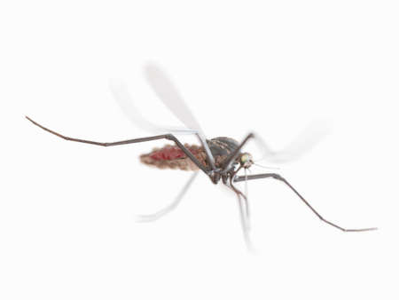 3d rendered illustration of a mosquito Stock Photo