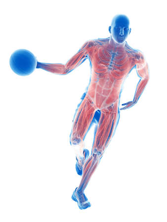 3d rendered medically accurate illustration of a basketball players muscles