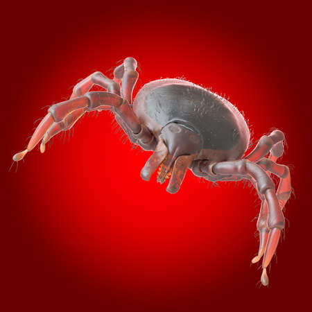 3d rendered illustration of a tick on a red background Stock Photo
