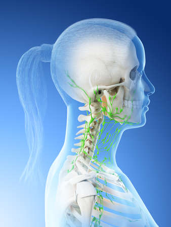 3d rendered illustration of a females lymphatic system of the head and neck Stock Photo