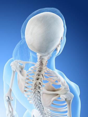3d rendered illustration of a females skeletal back Stock Photo
