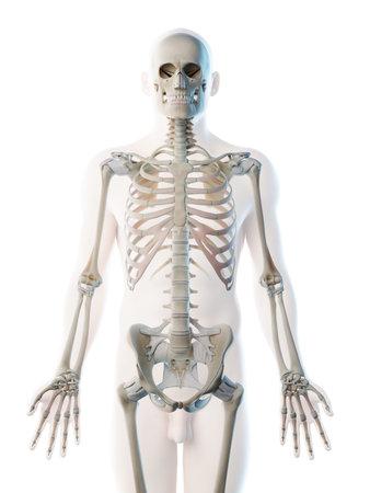 3d rendered illustration of a mans skeleton of the upper body