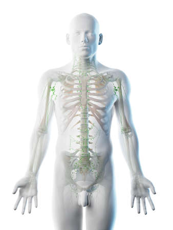 3d rendered illustration of a mans lymphatic system Stock Photo