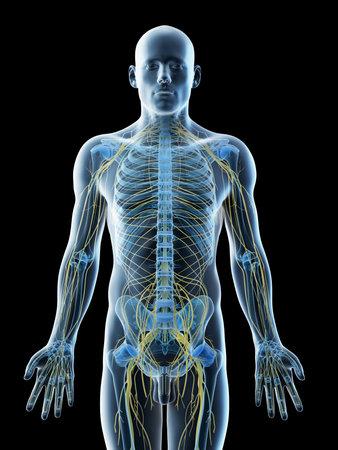 3d rendered illustration of a mans nervous system Reklamní fotografie