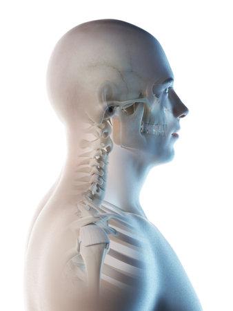3d rendered illustration of a mans skeletal head and neck