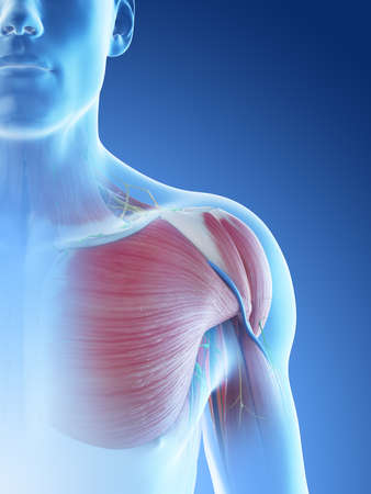 3d rendered illustration of a mans anatomy of the shoulder Archivio Fotografico - 117986417