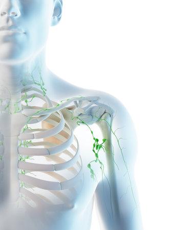 3d rendered illustration of a mans lymph nodes of the shoulder area Archivio Fotografico - 117986583