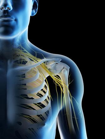 3d rendered illustration of a mans nerves of the shoulder Archivio Fotografico - 117989120