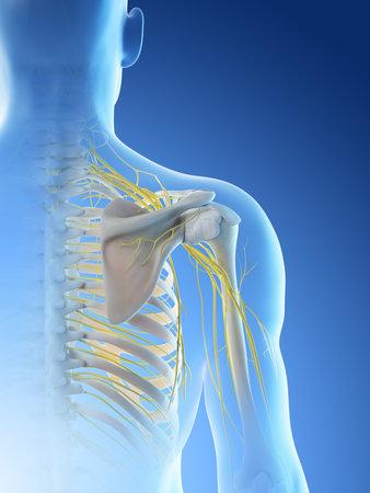3d rendered illustration of a mans nerves of the shoulder Archivio Fotografico - 117989126
