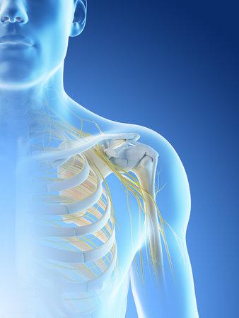 3d rendered illustration of a mans nerves of the shoulder Archivio Fotografico - 117989127