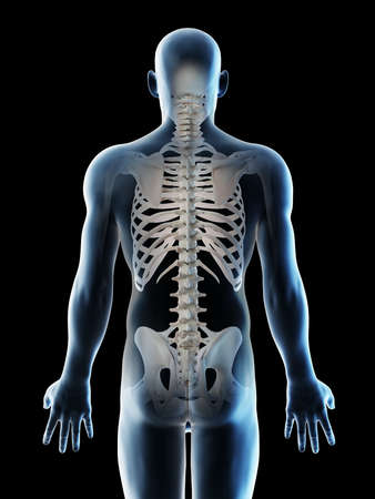 3d rendered illustration of a mans skeletal back