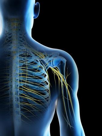 3d rendered illustration of a mans nerves of the shoulder Archivio Fotografico - 117988859