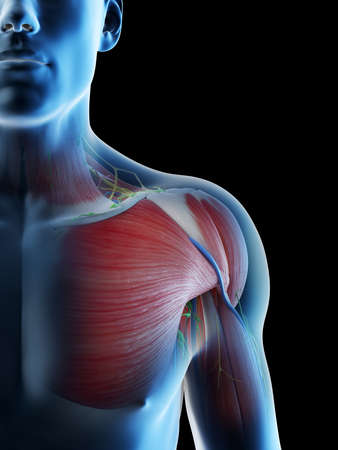 3d rendered illustration of a mans anatomy of the shoulder Archivio Fotografico - 117988761
