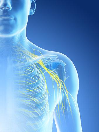 3d rendered illustration of a mans nerves of the shoulder