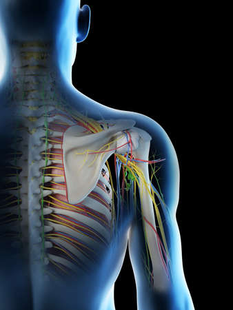3d rendered illustration of a mans anatomy of the shoulder Archivio Fotografico - 117988663