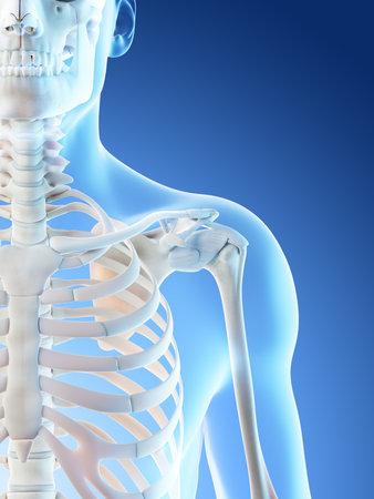 3d rendered illustration of a mans skeletal shoulder