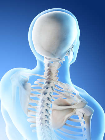 3d rendered illustration of a mans skeletal neck