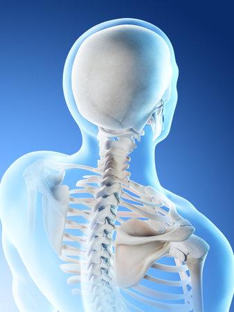 3d rendered illustration of a mans skeletal neck