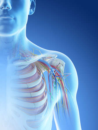 3d rendered illustration of a mans anatomy of the shoulder Archivio Fotografico - 117988550