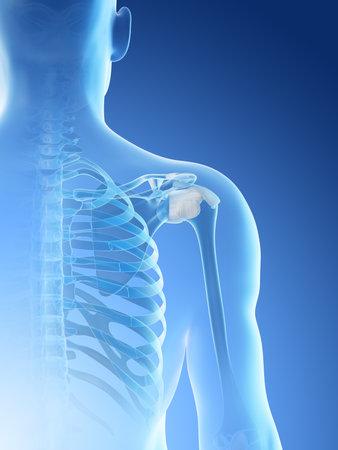 3d rendered illustration of a mans skeletal shoulder Archivio Fotografico - 117988551