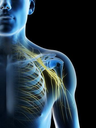 3d rendered illustration of a mans nerves of the shoulder Archivio Fotografico - 117988552