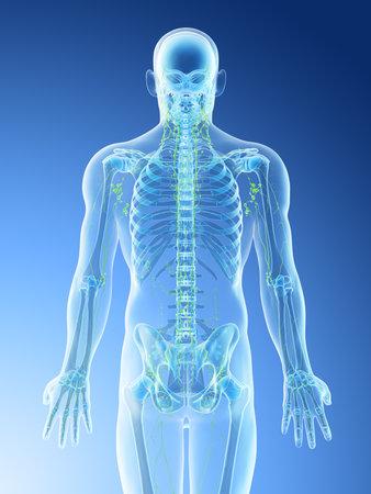 3d rendered illustration of a mans skeletal back