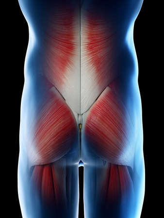 3d rendered illustration of a mans muscles of the hip Stock Photo