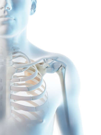 3d rendered illustration of a mans skeletal shoulder