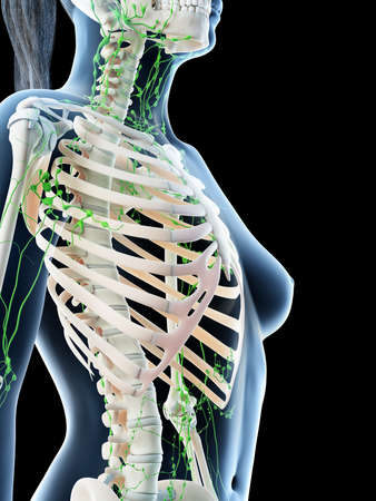 3d rendered illustration of a females upper body lymphatic system