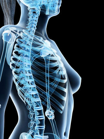3d rendered illustration of a females skeletal thorax