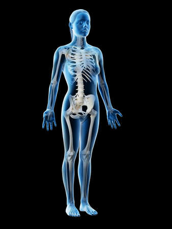 3d rendered illustration of a females skeleton and ligaments Stockfoto