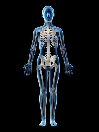 3d rendered illustration of a females skeleton and ligaments Stock Photo