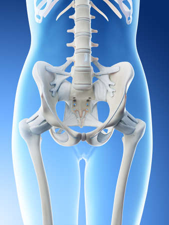 3d rendered illustration of a females skeletal pelvis and ligaments Stock Photo