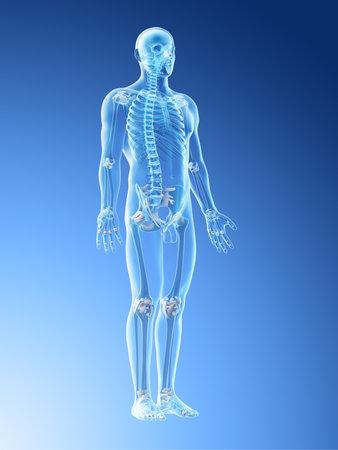 3d rendered illustration of a mans skeleton and ligaments Stok Fotoğraf