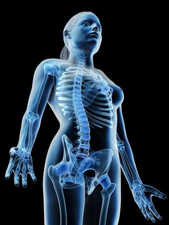 3d rendered illustration of a females skeletal upper body Stock Photo