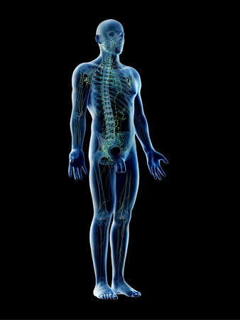 3d rendered illustration of a males lymphatic system