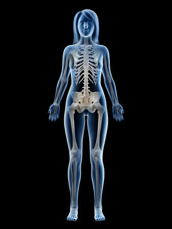 3d rendered medically accurate illustration of a females skeletal system