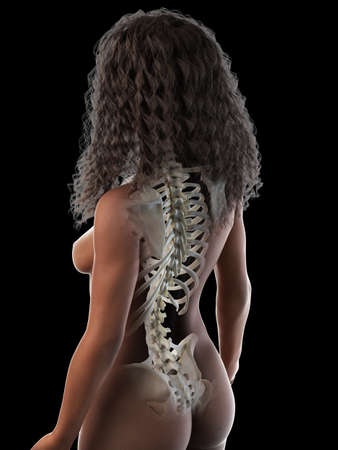 3d rendered medically accurate illustration of a black females skeletal back