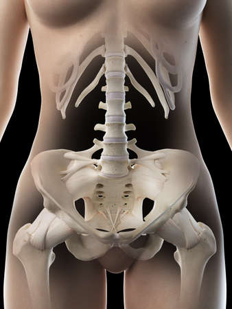 3d rendered medically accurate illustration of a females pelvic bones