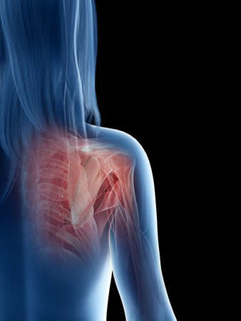 3d rendered medically accurate illustration of a females shoulder muscles