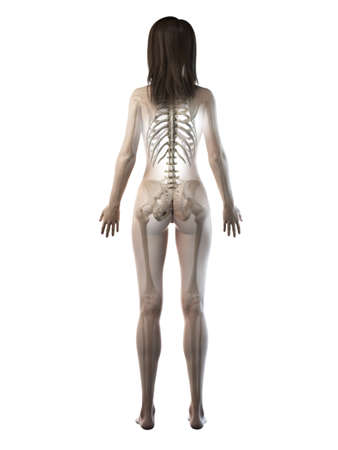 3d rendered medically accurate illustration of a females skeleton