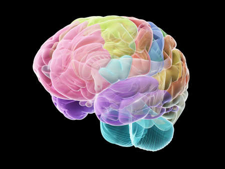 3d rendered medically accurate illustration of the sections of the human brain Stock Photo