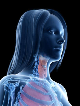 3d rendered medically accurate illustration of a females throat anatomy Reklamní fotografie