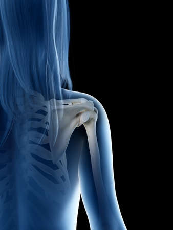 3d rendered medically accurate illustration of a females shoulder joint 스톡 콘텐츠