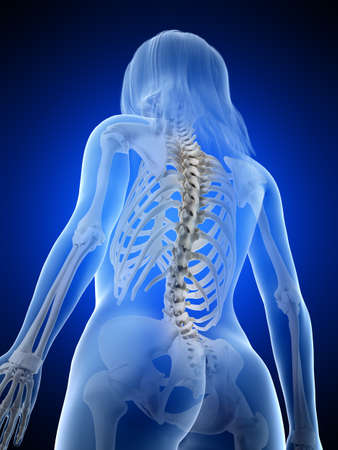 3d rendered medically accurate illustration of a females  skeletal back